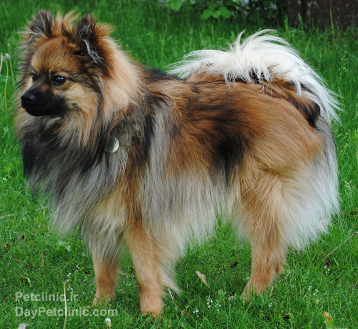 Farmanieh Petclinic, Gallery Of Breeds: Family Dogs